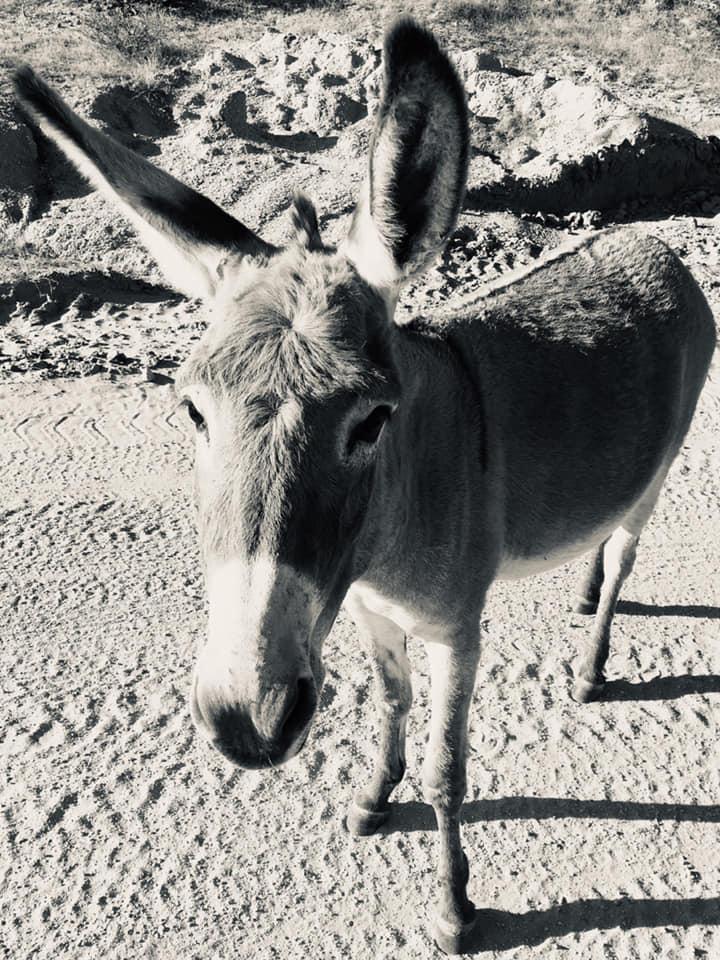 Tim Lang Burro Donkey