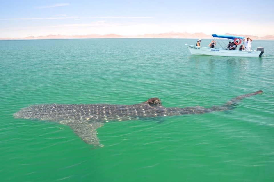 whale shark boat Tim Lang